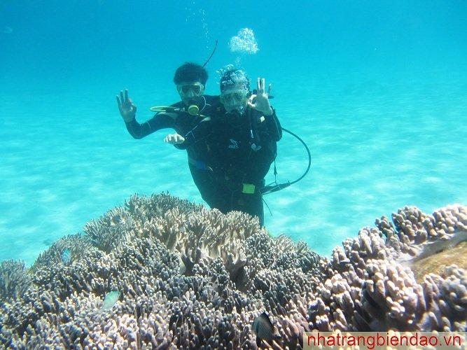 Tour Lặn Biển Nha Trang khuyến mãi 25% chỉ còn 490.000 VNĐ